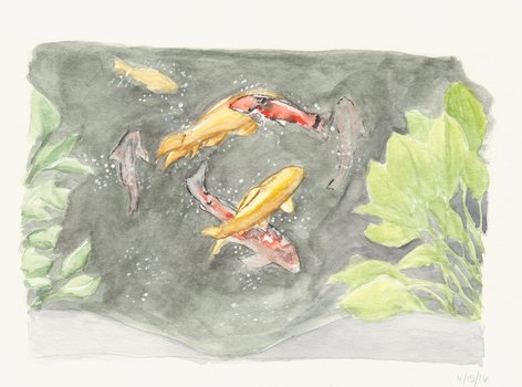 Koi Pond by mclermon