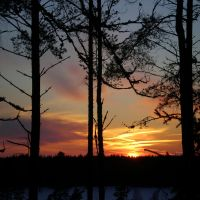 Forest Sunset 13 by niksuo