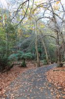 Forrest Path Stock 2 by CNStock
