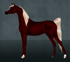 Ansata Amir - Adult Reference by Ehetere