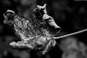 Autumn BW IV by tnhop