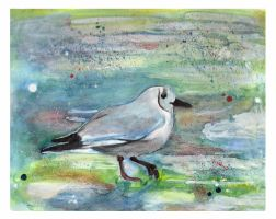 Seagull 2 by Paintwick