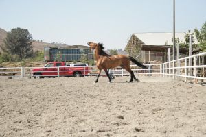bay horse stock 7 by xbr0kendevotion