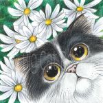 Persian Kitten with Daisies by bigcatdesigns
