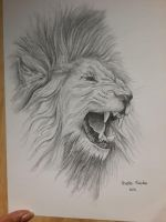 African Lion by chizzel