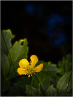 what's up buttercup II by rickster155