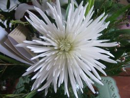 Fuji Mum by purple-the-cactus