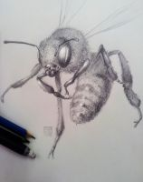 Bee by placitte2012