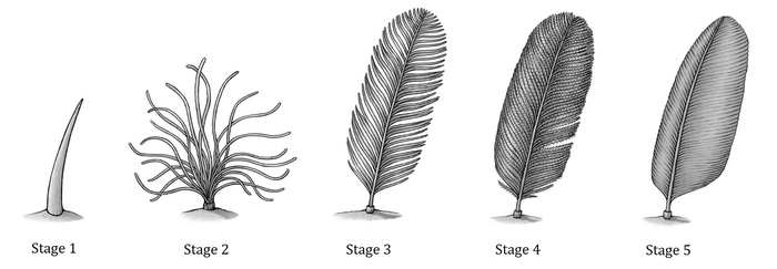 Feather Evolution by EWilloughby