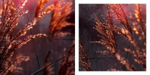 On fire I by rosaarvensis