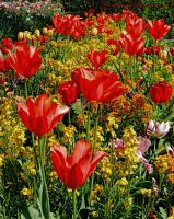 Reds and Yellows in Monet's garden at Giverny by artamusica