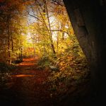 these lonely autumn days by RickHaigh