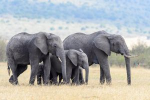 The-Family by vinayan