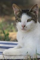 Cat Stock 106 by Malleni-Stock