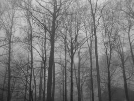 Foggy Forest 1 by bean-stock
