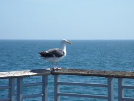 The Most Chill Seagull EVER XD by animedugan