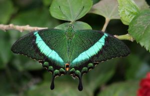 Emerald Butterfly. by MaresaSinclair