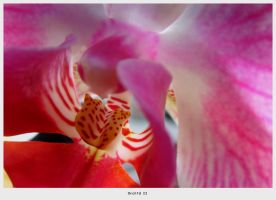 Orchid II by 04katty