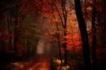 Dark Autumn by Nelleke