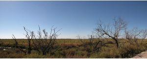 Camargues Trees 1 by FiLH