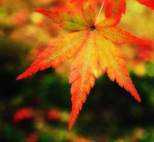 Autumn Leaf by Darjeell