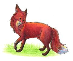 Some Odd Fox by Joava