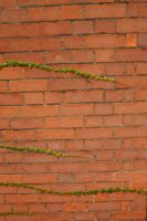 Brick Wall With Ivy 2 by FoxStox