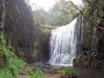 Rainforest Grove Waterfall by Little-Marsupial