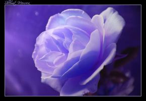 Blooming In Purple by ShlomitMessica
