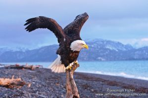 Eagle Fold by JWFisher