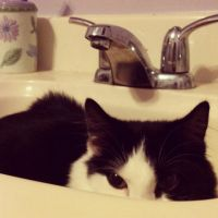 Yuki in the Sink by DarlingChristie