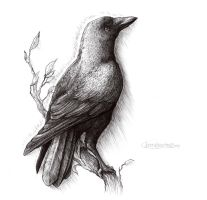 Inktober '15, Day 1, Whitby Crow by WhiteLionsOrchard