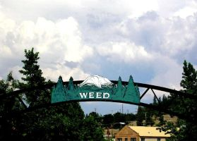 A Town Called Weed by marigrace