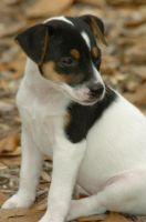 Stock:Puppy by slipping-away-stock