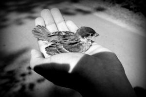 A life in your hands by AstridYLDK