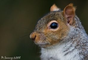 Details of a squirrel by Slinky-2012
