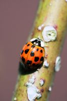 Ladybug's Journey by SpawnedImages