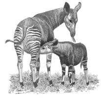 Okapi Mom and Baby by WillemSvdMerwe