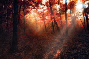 autumn fire by ildiko-neer