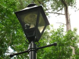 A Lamp in the Forest.. by demboys18