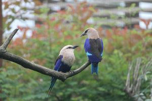 Birds by Linay-stock