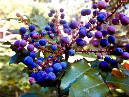 Some Purple Berries by kath660