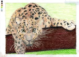 Amur Leopard Drawing +Colored by damnheliotrope