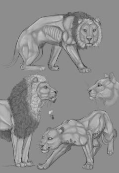 Lions by Grisluka