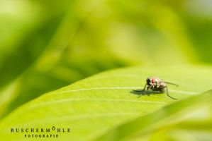 Fly-Spy by buschermoehle-photo