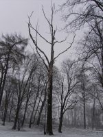 tree collection: solitaire by Germanstock