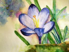 Crocus by Annica22