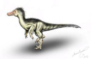 Velociraptor teenager by MALvit
