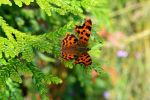 Fascinating Cypress Butterfly Meadow Bokeh by aegiandyad