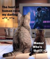 Kitties love Adam Lambert by KarolaKH